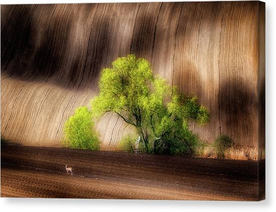 Rolling Hills Canvas Print - On The Fields by Piotr Krol (bax)