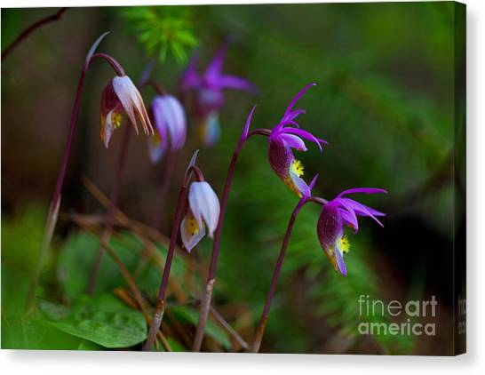 On The Forest Floor Canvas Print
