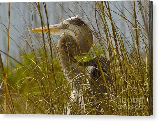 On The Gulf Canvas Print
