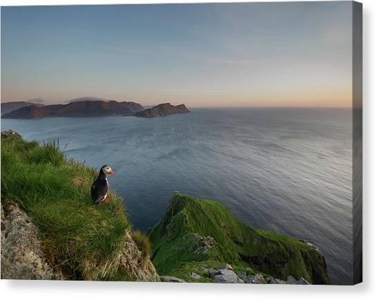 Puffins Canvas Print - On The Lookout by Olof Petterson