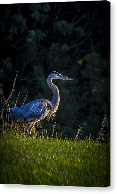 Florida Swamp Canvas Print - On The March by Marvin Spates