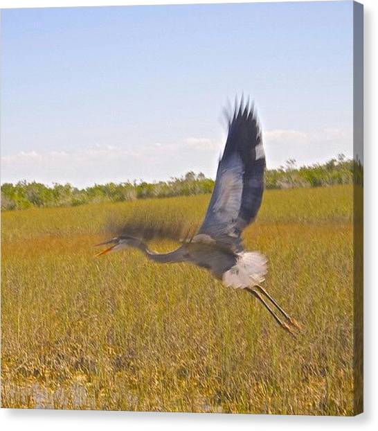 Everglades Canvas Print - On The Move By Judy Kay On by Judy Kay