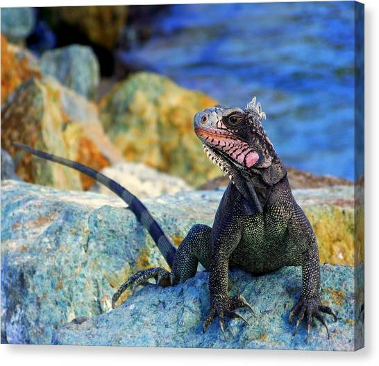 Iguanas Canvas Print - On The Prowl by Karen Wiles