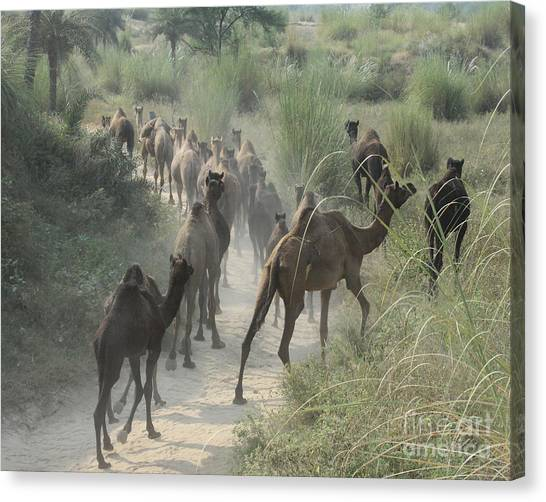 On The Road To Pushkar Canvas Print