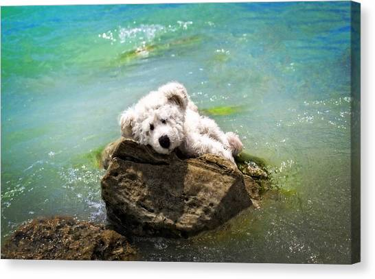 Teddybear Canvas Print - On The Rocks - Teddy Bear Art By William Patrick And Sharon Cummings by Sharon Cummings