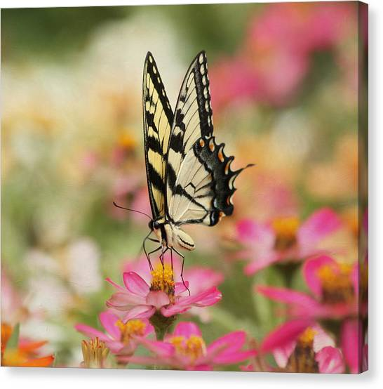 Zinnia Canvas Print - On The Top - Swallowtail Butterfly by Kim Hojnacki