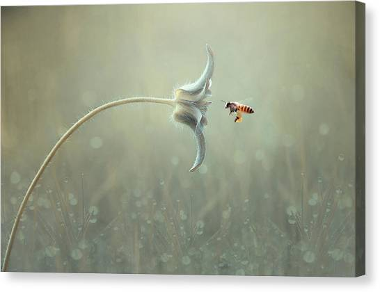 Wasp.insect Canvas Print - On The Way by Edy Pamungkas