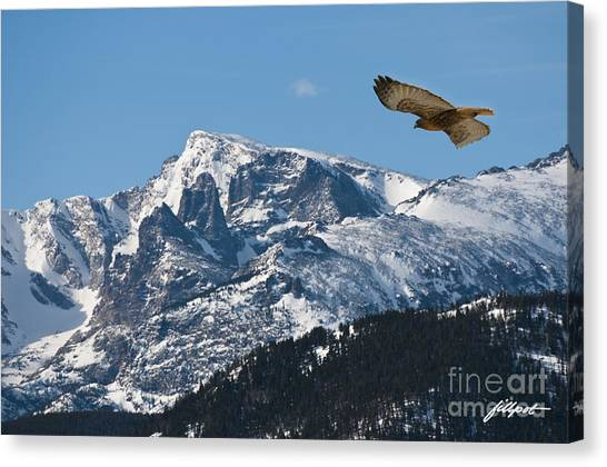 On The Wing Canvas Print