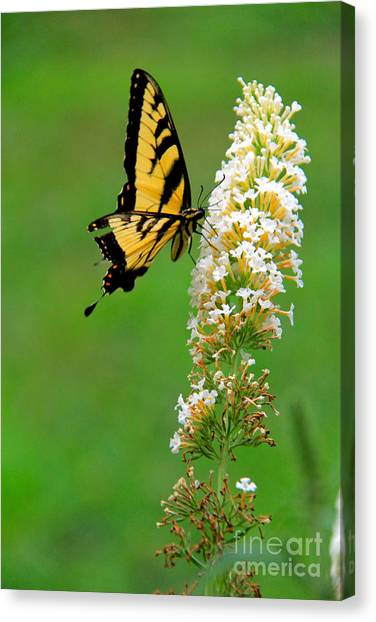 On The Wings Of A Butterfly Canvas Print