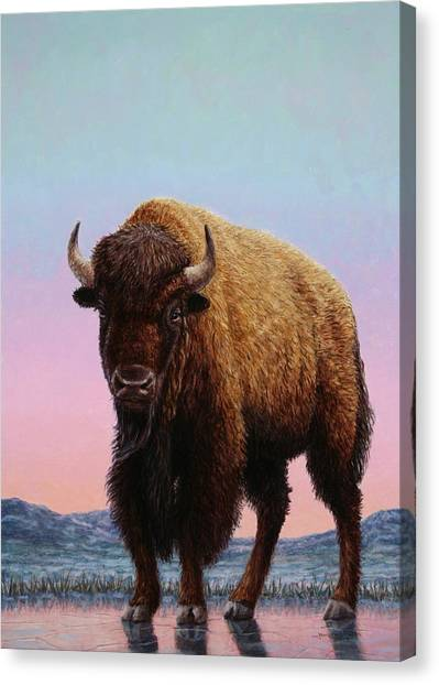 Bison Canvas Print - On Thin Ice by James W Johnson