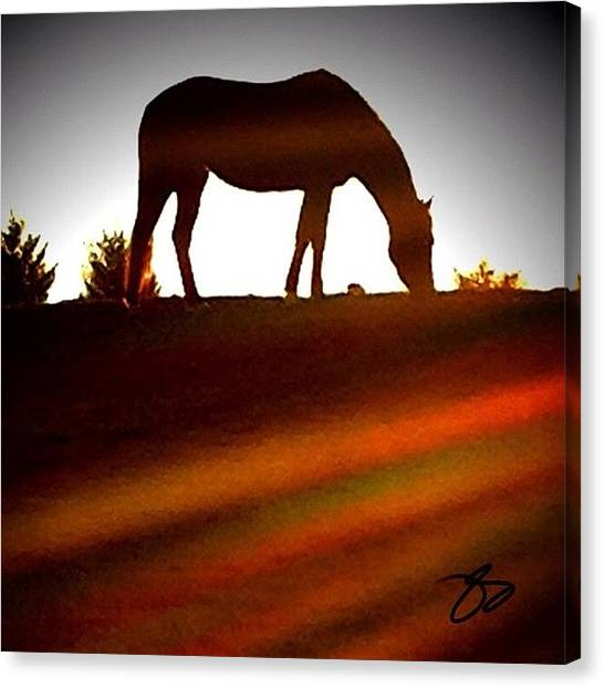 Horse Farms Canvas Print - On Top Of The Horizon by Tonya Self