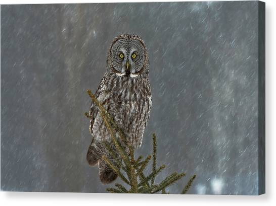 Scouting Canvas Print - On Watch by Nick Kalathas