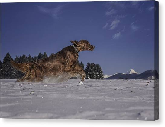 On Your Marks . . . Get Set . . . Go Canvas Print