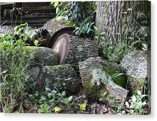 Once A Mighty Oak Canvas Print by Bishopston Fine Art