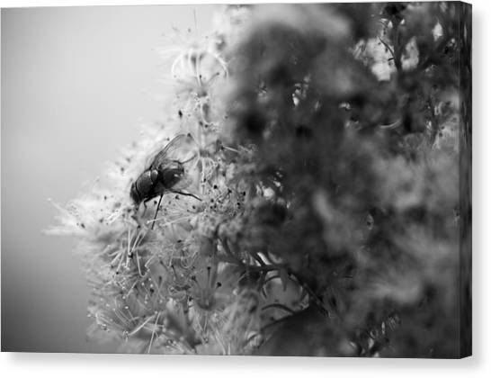 Saws Canvas Print - Once I Saw The Edge Of A Dream by Matthew Blum