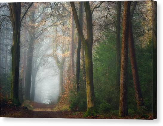 Foggy Forests Canvas Print - Once Upon A Dream by Ellen Borggreve