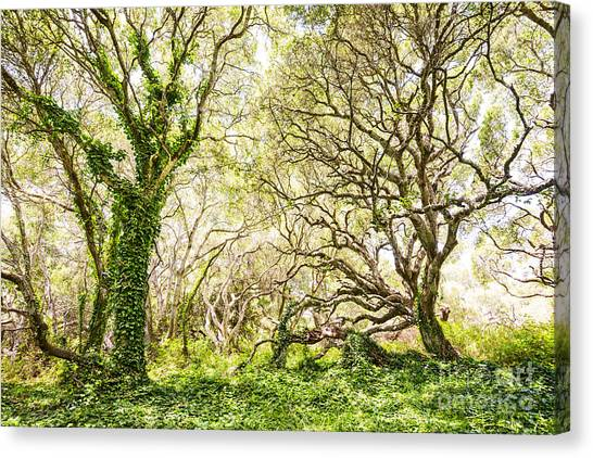 Oak Trees Canvas Print - Once Upon A Time by Jamie Pham