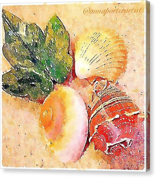 Seashells Canvas Print - All The Beautiful Shells by Anna Porter