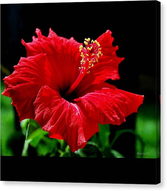 One Day Flower Canvas Print