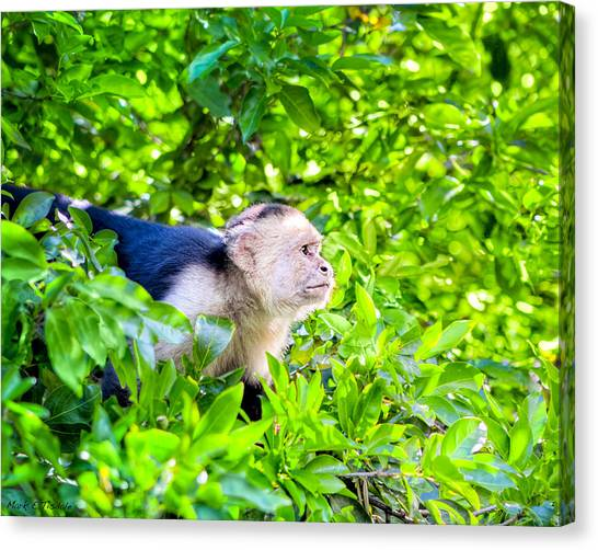 Costa Rican Canvas Print - One Determined Monkey - Costa Rica Wildlife by Mark E Tisdale