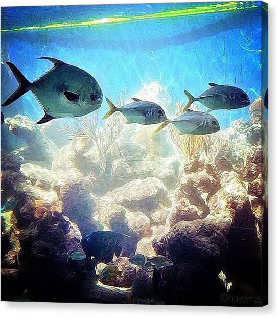 Aquariums Canvas Print - One Fish, Two Fish by Natasha Marco