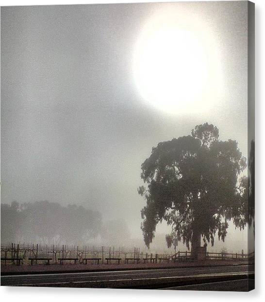 Vineyard Canvas Print - One Foggy Morn. by Cherie Harvey