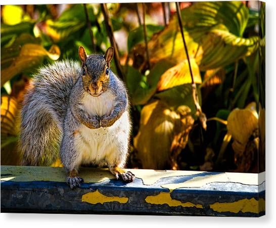 Gym Canvas Print - One Gray Squirrel by Bob Orsillo