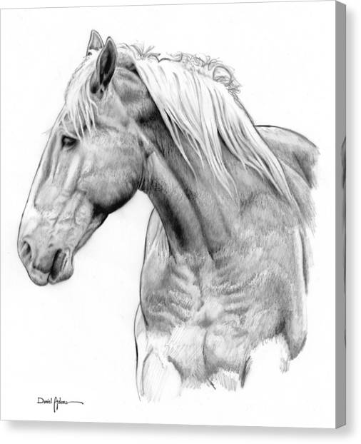 Da134 One Horse Daniel Adams  Canvas Print