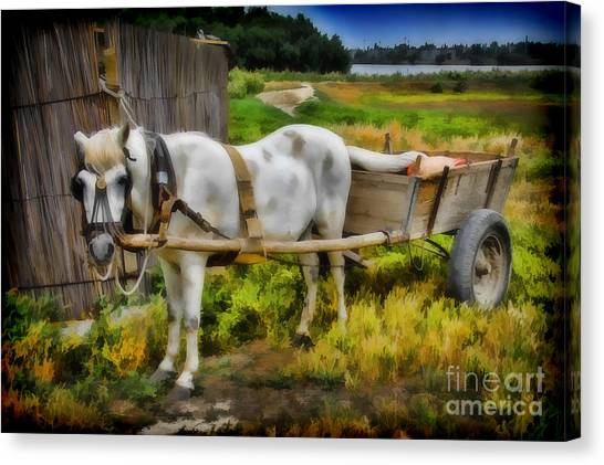 One Horse Wagon Canvas Print