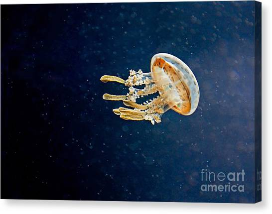 One Jelly Fish Art Prints Canvas Print