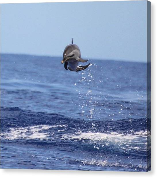Dolphins Canvas Print - One Of Kona's Acrobatic Spotted by Brian Governale