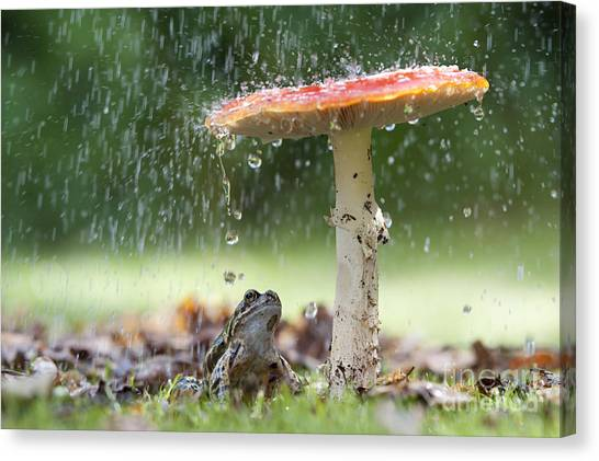Toadstools Canvas Print - One Rainy Day by Tim Gainey