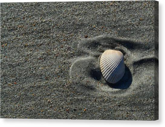 Seashells Canvas Print - One Shell In The Sand by Constance Faulk