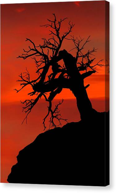 Canvas Print featuring the photograph One Tree Hill Silhouette by Greg Norrell