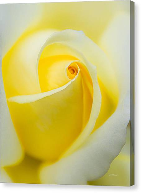 One Yellow Rose Canvas Print