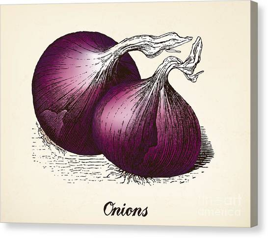 Engraving Canvas Print - Onions Vintage Illustration, Red Onions by Oliver Hoffmann