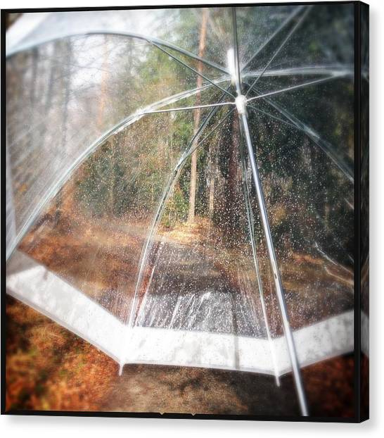 Forests Canvas Print - Open Umbrella With Water Drops In The Forest by Matthias Hauser
