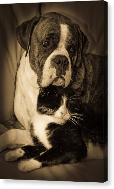 Brindle Canvas Print - Opposites Attract by DigiArt Diaries by Vicky B Fuller
