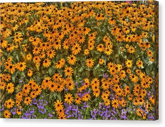 Orange And Purple Daises Canvas Print