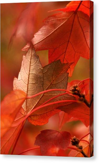University Of Wisconsin - Madison Canvas Print - Orange And Tan by Theo OConnor