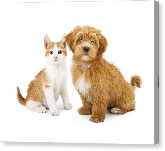 Orange And White Puppy And Kitten Canvas Print