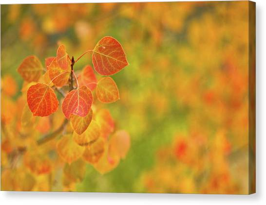 Orange Aspen With An Orange And Green Canvas Print