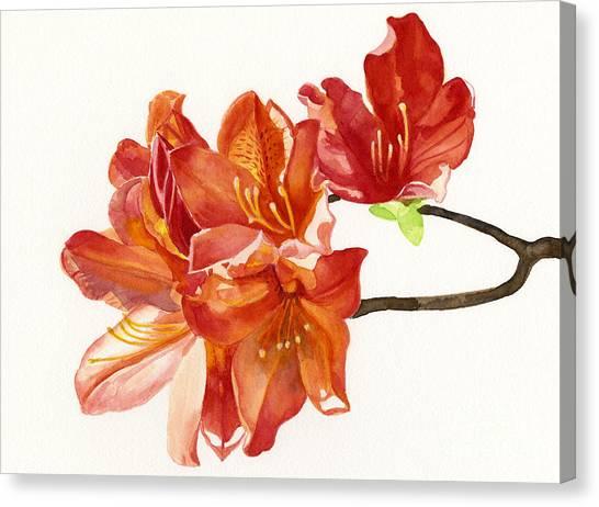 Orange Azaleas Canvas Print by Sharon Freeman
