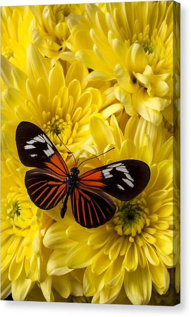 Pom-pom Canvas Print - Orange Black Butterfly by Garry Gay