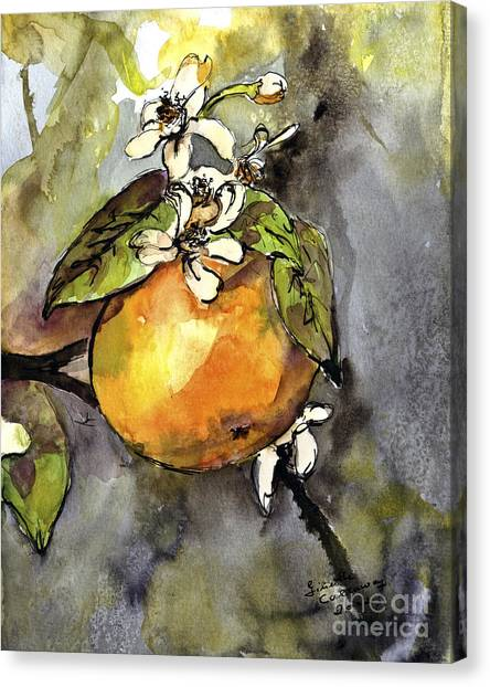 Orange Blossom Botanical Watercolor And Ink By Ginette Canvas Print