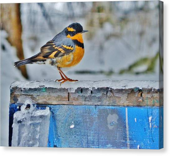 Orange Blue And Sleet Canvas Print