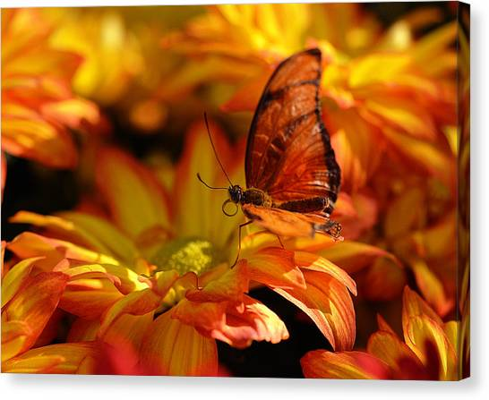 Orange Butterfly On Yellow Flowers Canvas Print
