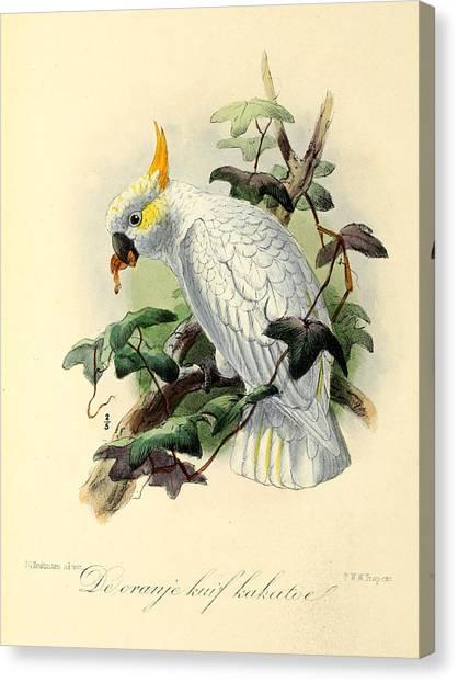 Cockatoo Canvas Print - Orange Cockatoo by Dreyer Wildlife Print Collections
