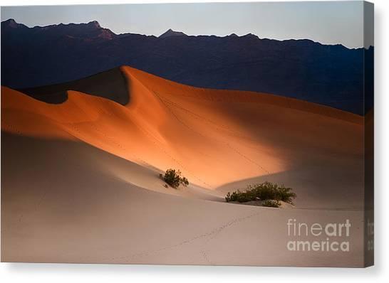 Death Valley Canvas Print - Orange Crush by Jennifer Magallon
