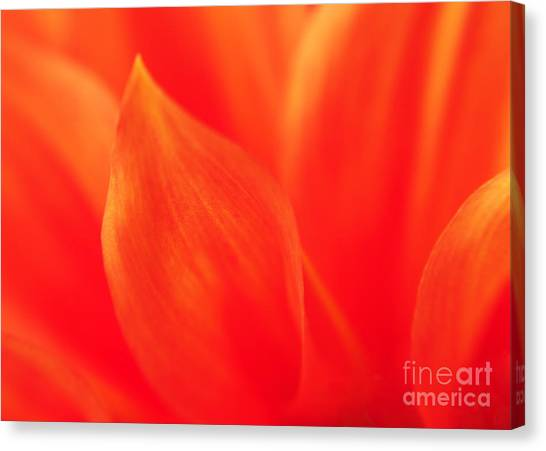 Orange Dahlia Abstract Canvas Print